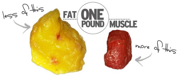 how_it_works_muscle_fat1